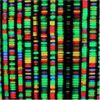 Should We Synthesise a Human Genome?