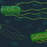 A new programming language enables virtually anyone to take control of a bacteria cell's functions.