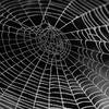 Computing With Spiders' Webs