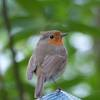Research Teaches Machines to Decipher the Dawn Chorus
