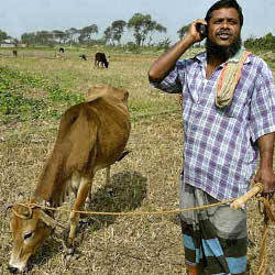 Indian farmer on cellphone