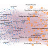Network Analysis Predicts Drug Side Effects
