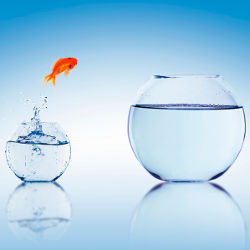 goldfish jumping from small fishbowl to bigger fishbowl