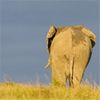 Why the Days Are Numbered For Hadoop As We Know It