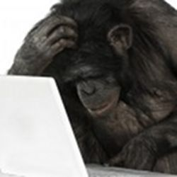 A chimp at a computer