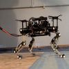 Cheetah-Cub Quadruped Robot Learns to Walk, Trot Using Gait Patterns From Real Animal