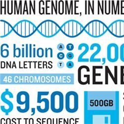 Human genome, in numbers