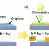 Materials Scientists Build Chlorophyll-Based Phototransistor