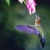 Google's 'Hummingbird' Hatches New Search Formula