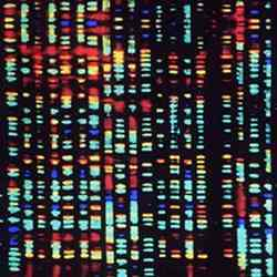 Computerised image of a fragment of the human genome.