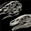 Digital Reconstruction Restores Rare Dino Skull