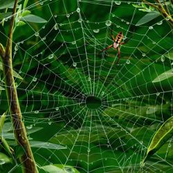 spider web and leaves