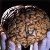 Mediators Call For Change to Science of Human Brain Project