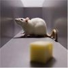 Brain Compass Implant Gives Blind Rats Psychic Gps