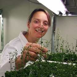 Monika Doblin, Research Fellow at the School of BioSciences at the University of Melbourne examines Arabidopsis thaliana plants as part of the Cell Wall Synthesis project.