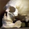 Ancient American Genome Rekindles Legal Row