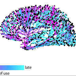 A look at the speed at which different connections in the brain are used to spread information.