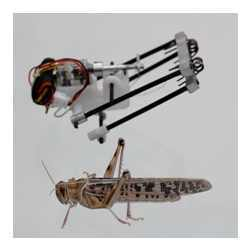 "A locust and the ""TAUB"" (for ""Tel Aviv University and Ort Braude College"") robot."