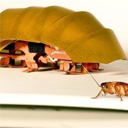 CRAM compressible robot and real roach