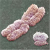 Human History Traced Via the Y Chromosome