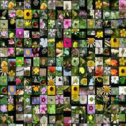 Source images of flowers.