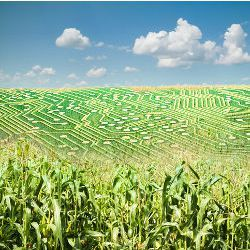 Nsf Funds Big Data Project in Digital Agriculture | Careers
