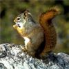 Who's Winning the Cyber War? The Squirrels, of Course