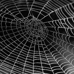 A spider's web.