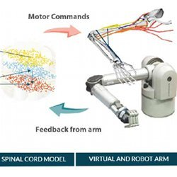 Activity in the biomimetic cortical and spinal cord models drives a virtual arm, which is mirrored by a robot arm.