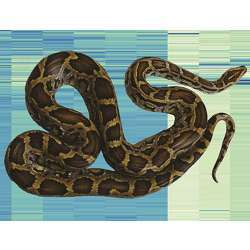 A Burmese python superimposed on an analysis of gene expression that uncovers how the species' organs change after feeding.