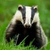 Eu Developing Robot Badgers For ­nderground Excavation