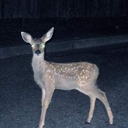 Literally, a deer in the headlights.