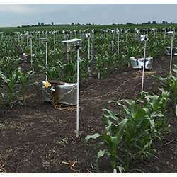 Using consumer point-and-shoot cameras to collect time-lapse videos of maize plants growing at Iowa State University.