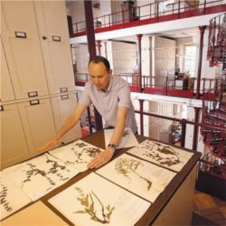Digitizing plant specimens