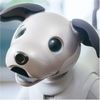 Sony's Aibo Robotic Dog Is Back, with Some New Tricks