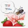 Fruit Fly Brains Inform Search Engines of the Future