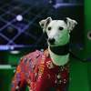 Dogs Get the Hollywood Treatment to Make Animal Animations More Realistic