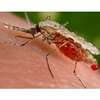 Global Mosquito-Sensing Network Being Built Using Smartphones