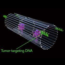 The key to programming a nanorobot that attacks only a cancer cell was to include a special payload on its surface.