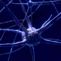 A nerve cell, which artificial neural networks attempt to mimic.