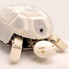 Robotic Tortoise Helps Kids to Learn That Robot Abuse Is a Bad Thing