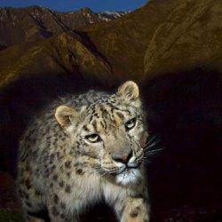 conservation technology, illustrative photo