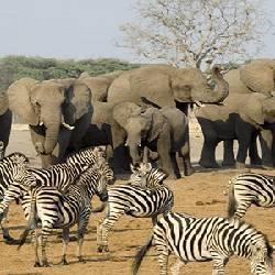African wildlife.