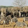 Drones Survey African Wildlife
