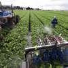 As Immigrant Farmworkers Become More Scarce, Robots Replace Humans