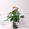 This Plant Is Driving Its Own Robot