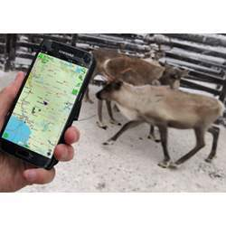 Tracking reindeer with a mobile app.