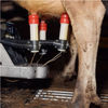 Robotic Milkers and an Automated Greenhouse: Inside a High-Tech Small Farm