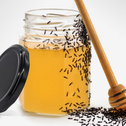 ants and honey jar