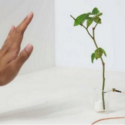 plant with conductive channel
